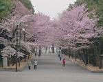 2020.05.13 01札幌(北海道神宮)