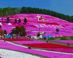 2020.05.13 06芝桜(東藻琴)